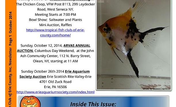 SomeThings Fishy, Oct 2014