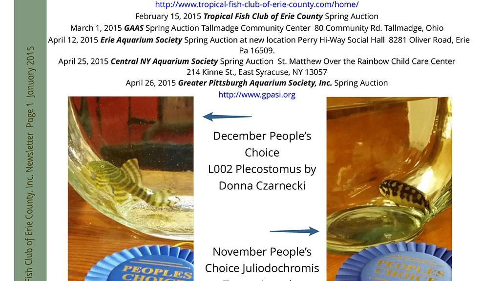 TFCEC-newsletter-Jan201502-1