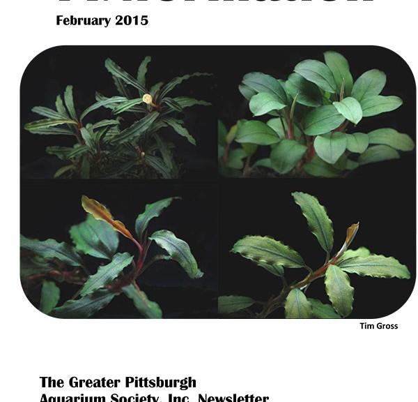 FINformation_February2015-1