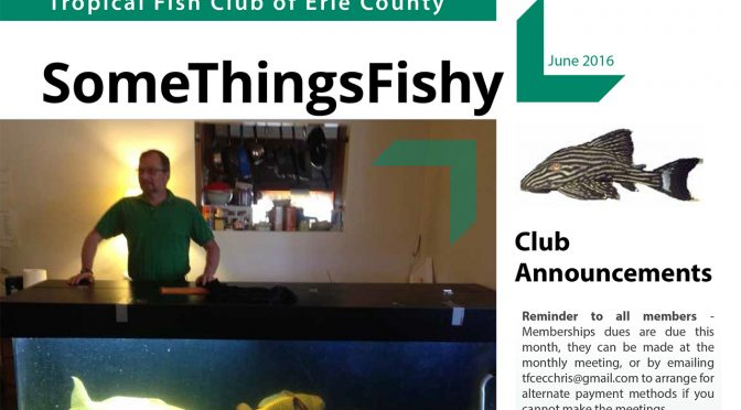 SOME THINGS FISHY ISSUE 6 VOL 29 June 2016