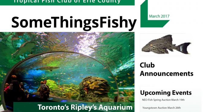 SOME THINGS FISHY ISSUE 3 VOL 30 March 2017