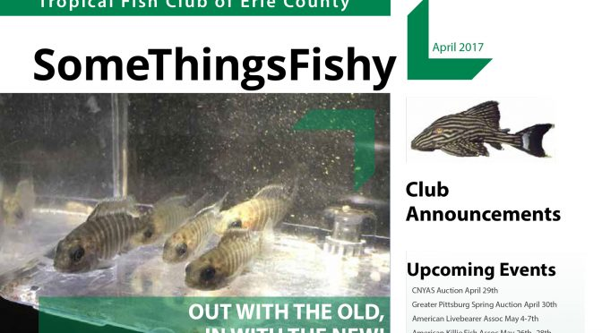 SOME THINGS FISHY ISSUE 4 VOL 30 April 2017